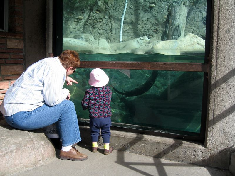 Checking out the otters