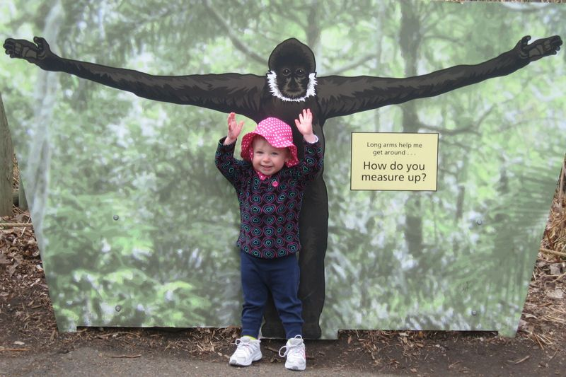 Monkey measures